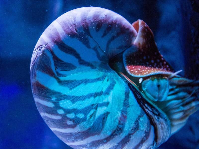 SeaLife Nautilus
