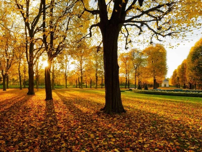 Herbstliche Lindenallee