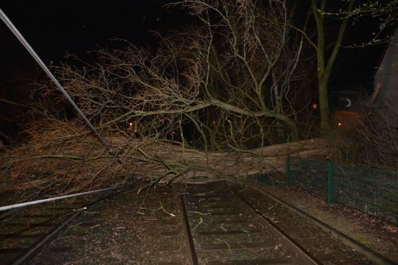 Umgestürzte Pappel auf den Gleisen der Stadtbahnlinie 8 in Mittelfeld