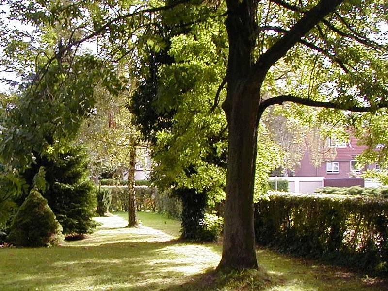 Mehrere Bäume in einem Garten