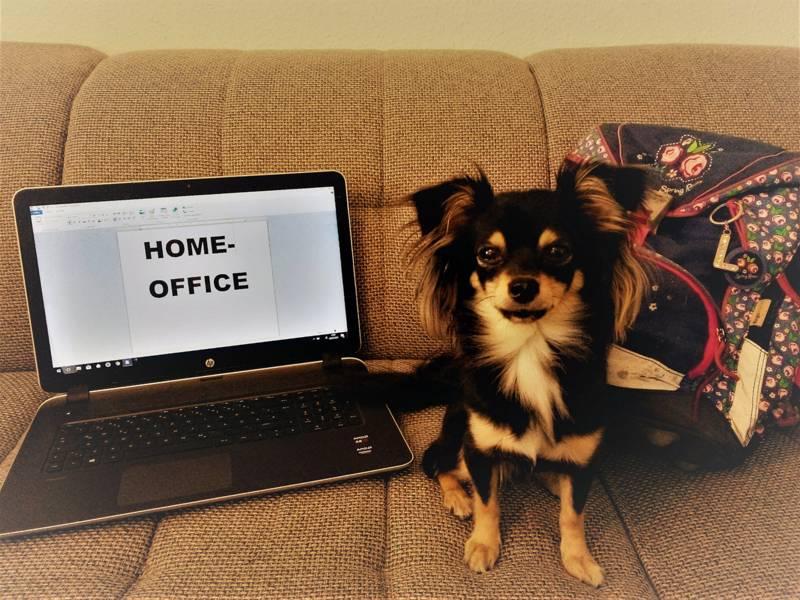 Ein Laptop, ein Hund und ein Ranzen auf einem Sofa