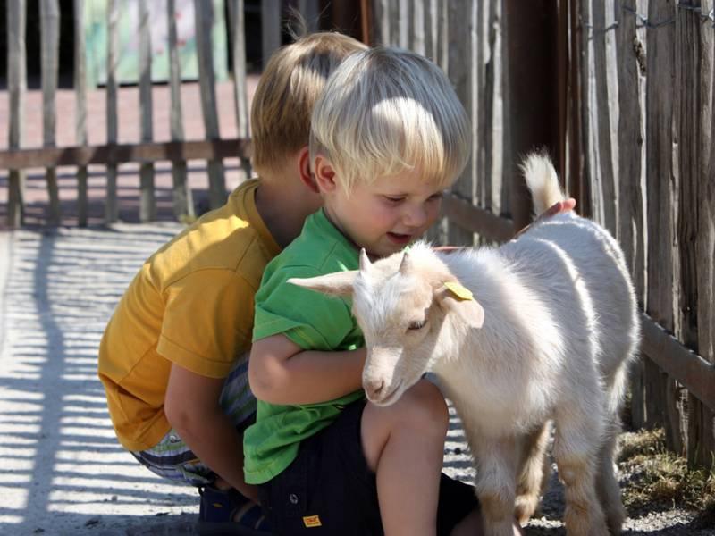 Zwei kleine Kinder spielen mit einer Baby-Ziege.