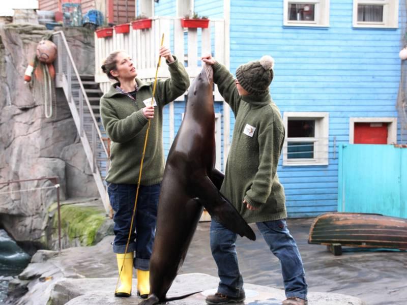 Zwei Frauen vermessen einen Seelöwen.