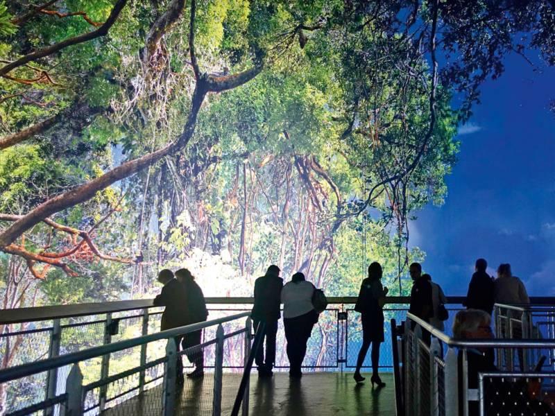 Menschen stehen an einem Geländer und schauen auf ein Urwaldpanorama.