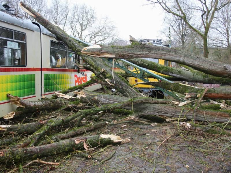 Baum ist in einen Gelenktriebwagen gekracht
