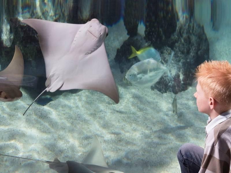 Junge vor einem Aquarium mit einem Rochen