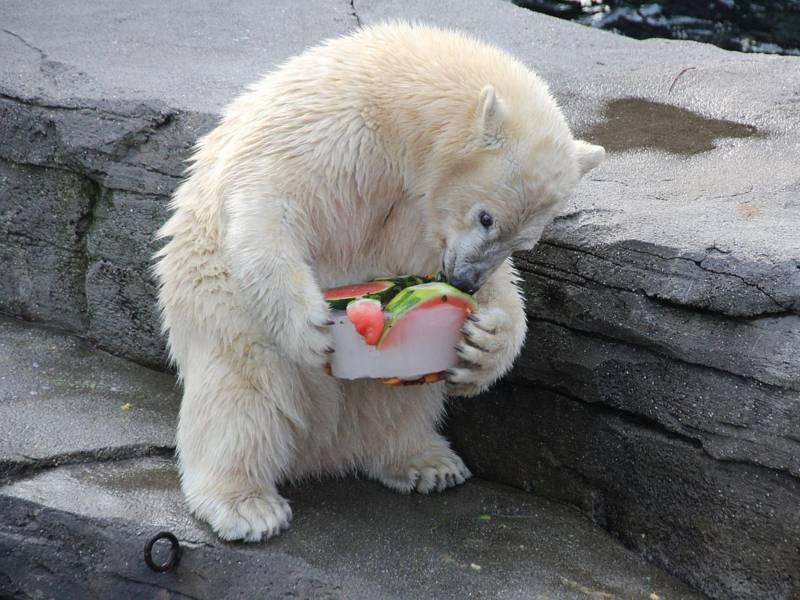 Eisbär mit Eistorte