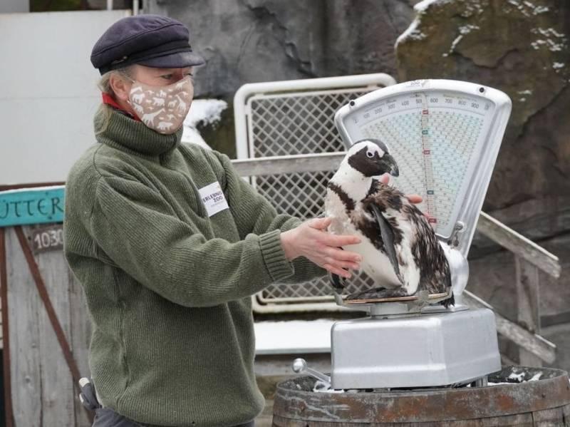 Frau setzt einen Pinguin auf eine Waage