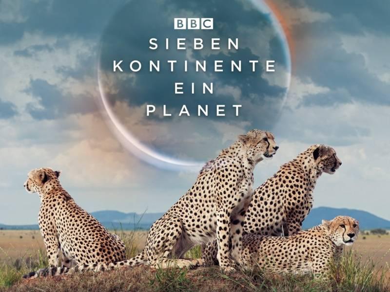 Vier Leoparden sitzen beinander auf einer Wiese.