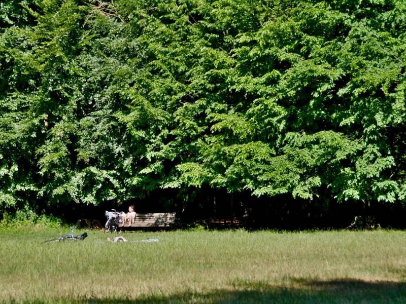 Vor einem Wald steht eine Bank auf einer Wiese.