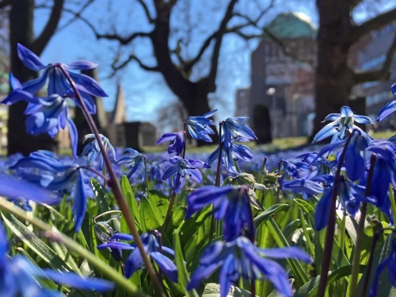 Blaue Blumen im Vordergrund
