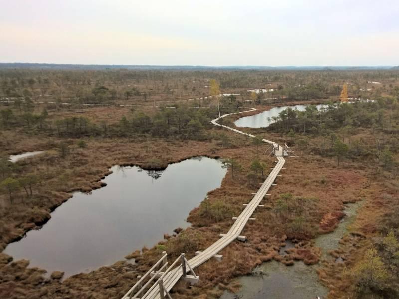 Moorlandschaft mit Tümpeln und Bohlenweg.