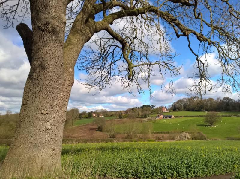 Landschaft mit Baum im Vordergrund.
