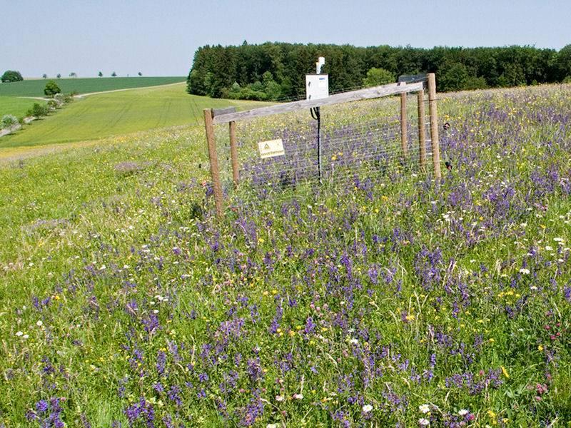 Weide mit Blumen und eingezäunter Messstation
