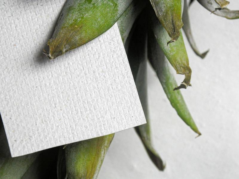 Ananasblätter und Papier