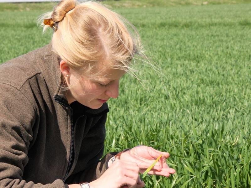 Frau betrachtet einen Halm auf einem grünen Feld