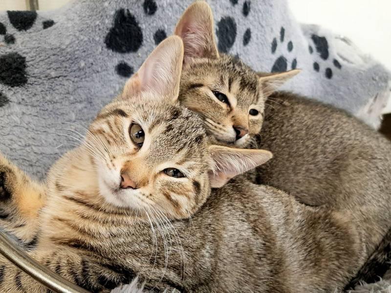 Zwei Hauskatzen