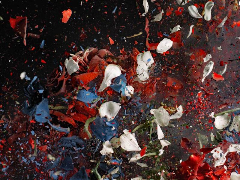 Explodierende Blütenblätter