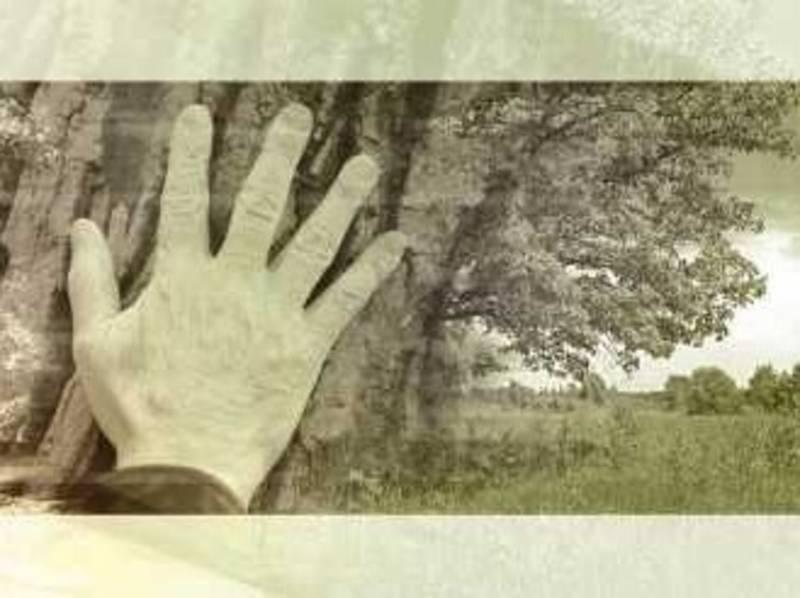 Eine Hand liegt auf dem Stamm eines Baumes