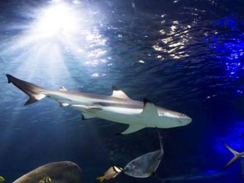 Ein Hai