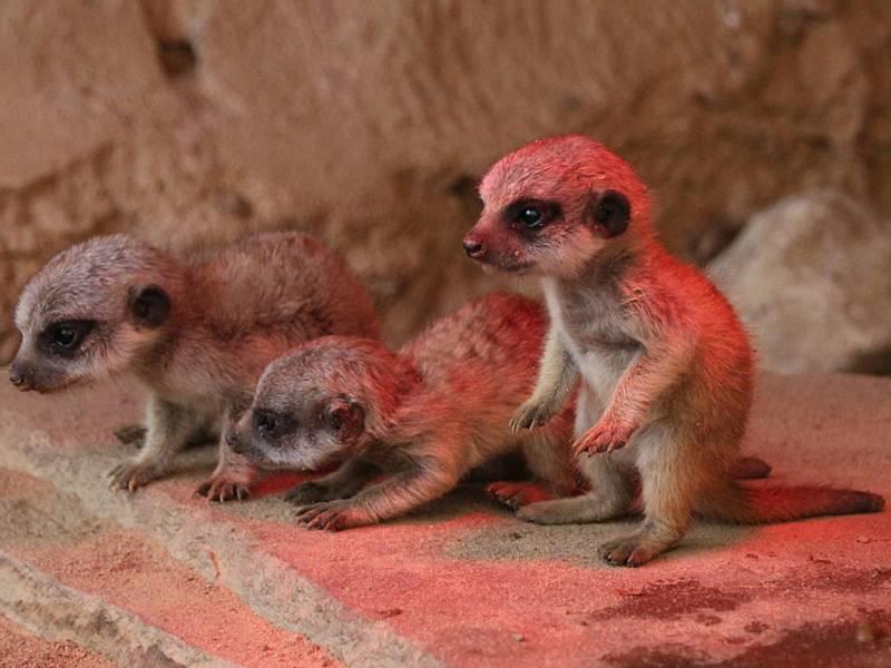 Drei junge Tiere