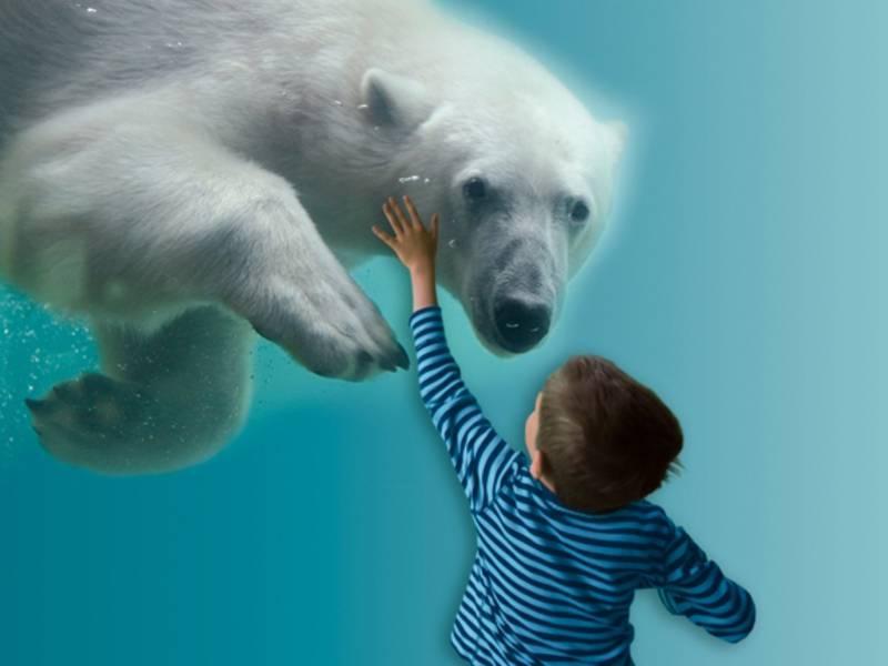 Eisbär schwimmt im Wasser vor einem Jungen.