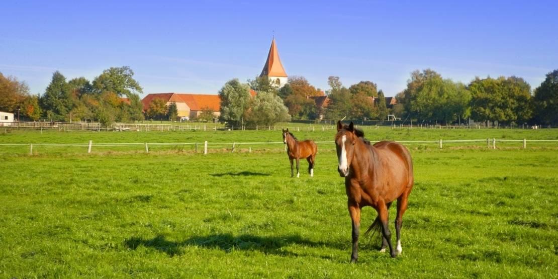 Weidende Pferde in Isernhagen