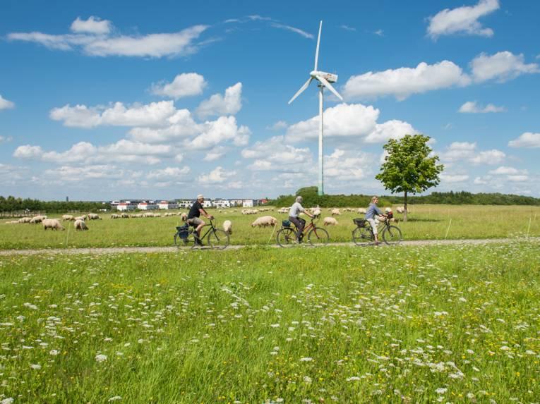 Drei Personen auf Rädern, die durch eine Schafherde fahren. Im Hintergrund ein Windrad. Drumherum Wiesen.