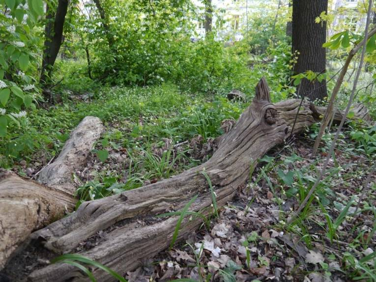 Baumstämme im Wald.