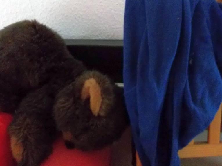 Teddy und Pullover