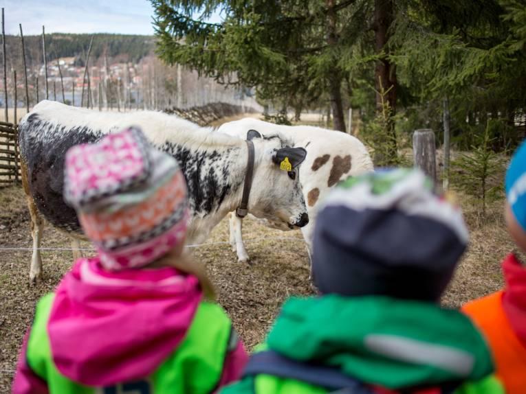 Kinder betrachten Kühe