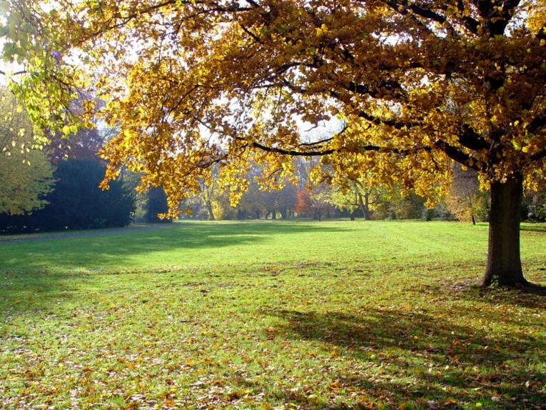 Ein Blick in den Maschpark am Neuen Rathaus, die Bäume tragen bereits ein buntes Blätterkleid.