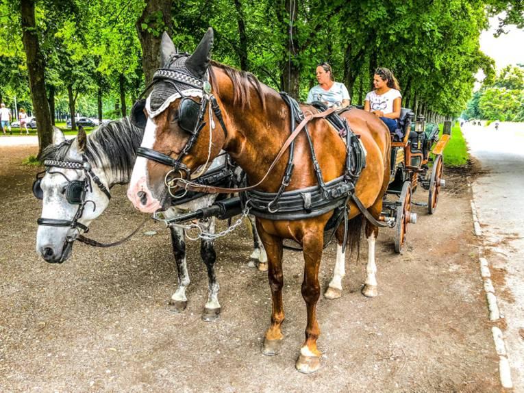 Zwei Frauen auf einer mit zwei Pferden bespannten Kutsche