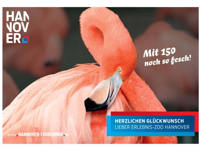 Flamingo im Erlebnis-Zoo Hannover
