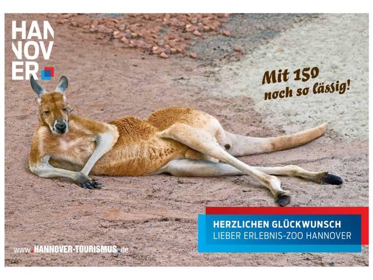 Känguruh im Erlebnis-Zoo Hannover