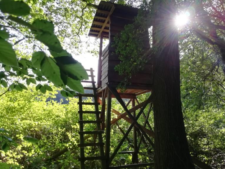 Ein Hochsitz im Wald mit Gegenlicht