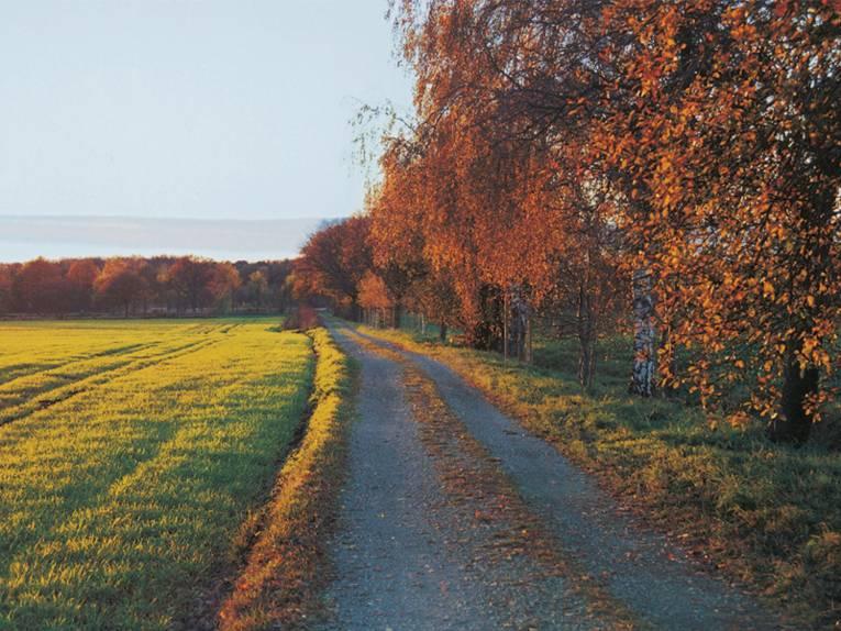 Schotterweg in der Schwarzen Heide