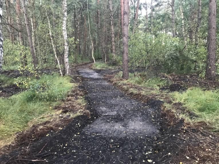 Ein geebneter Erdweg durch ein Waldstück