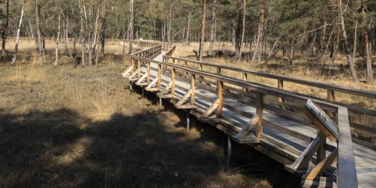 Holzsteg mit Geländer in einer Moorlandschaft