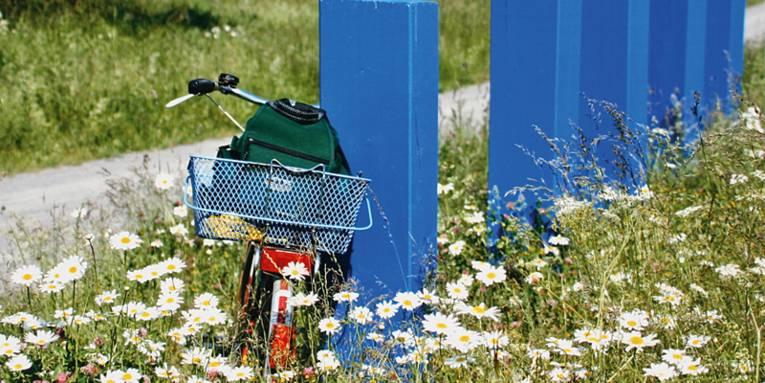 Fahrrad am Wegesrand inmitten von Margaritten, das an einem blauen Holzpfahl lehnt,
