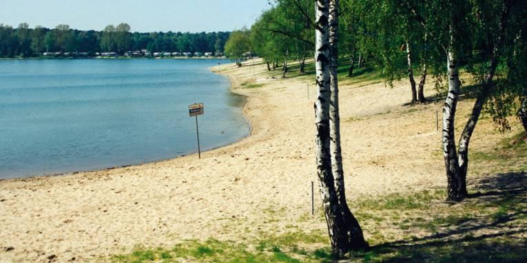 Birken, weisser Sandstrand, blaues Wasser, im Hintergrund Wald