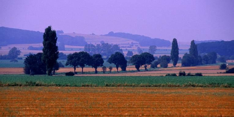 Landschaft mit Feldern, Bäumen und Hügeln im Hintergrund