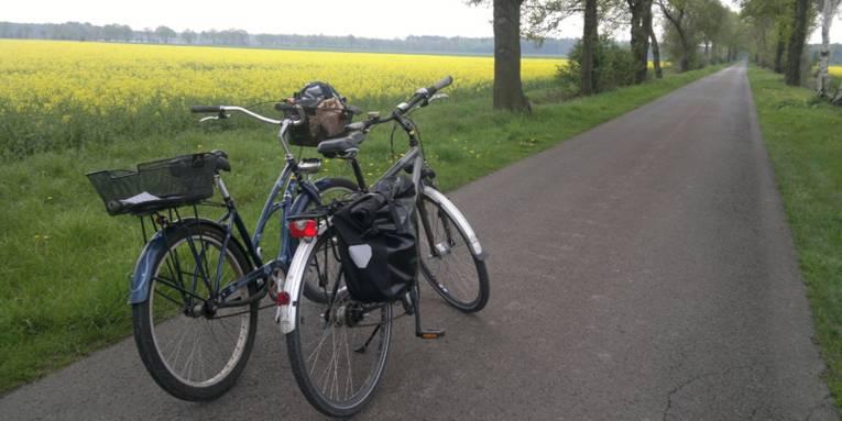 Zwei Fahrräder auf einem gepflasterten Weg. Bäume stehen rechts und links davon und auf der linken Seite ist außerdem ein großes Rapsfeld zu sehen.