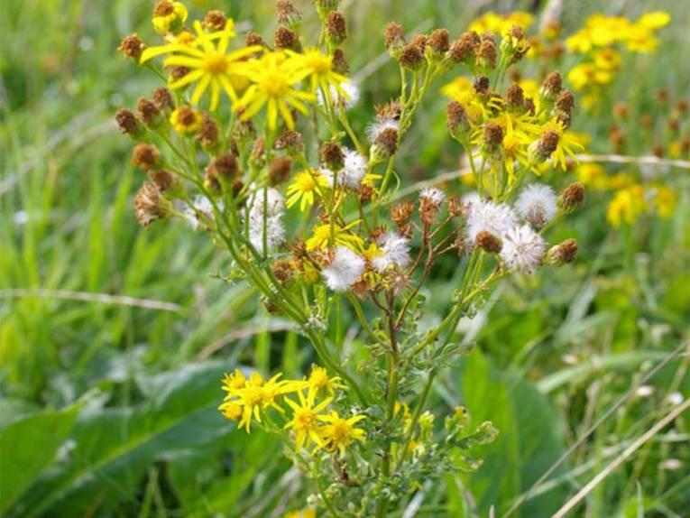 Blüten und Samen