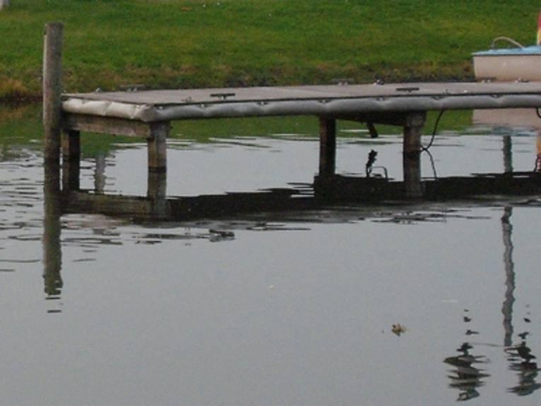 Bootsanleger und zwei Wasservögel