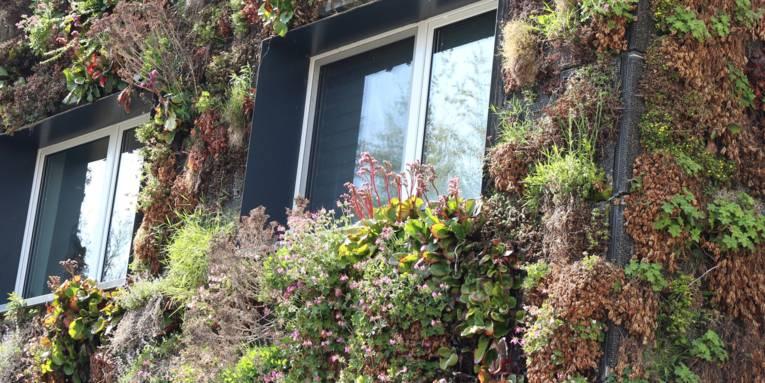 Hausfassade mit Fenstern und Pflanzen