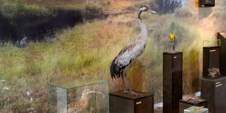 Ausstellungsfläche in einem Gebäude mit Vögeln und anderen Tieren, die im Moor leben