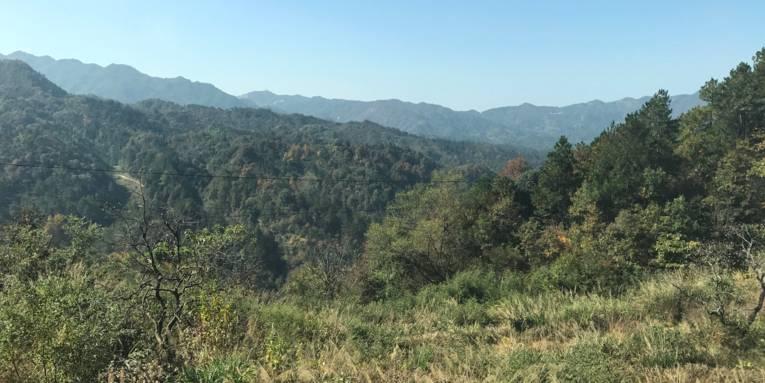 Blick auf eine bewachsene Bergkette.