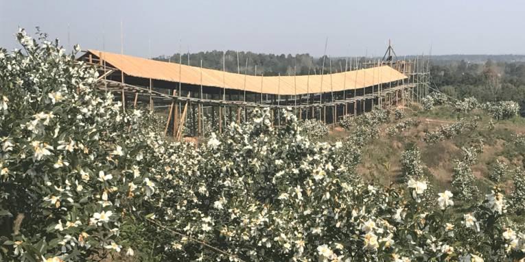 Grüne Pflanzen mit weißen Blüten wachsen an einer Hanglage, auf dem Hügelkamm steht ein überdachtes Gerüst aus Holz oder Bambus.