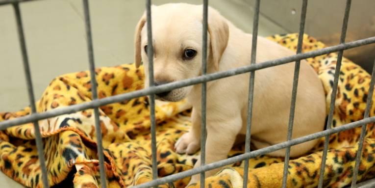 Junger Hund auf einer Decke hinter Gittern